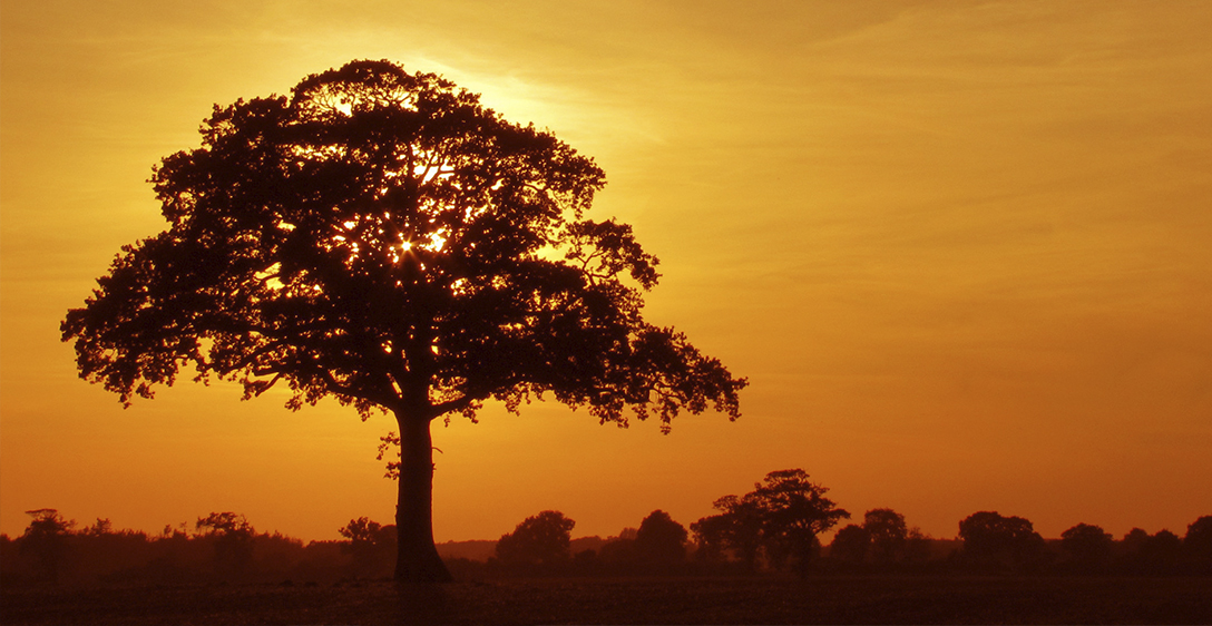 Sunset tree.jpg