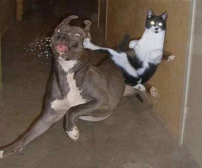 cat_kicks_dog.jpg